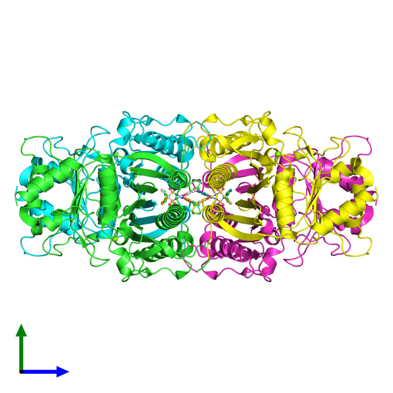 <div class='caption-body'><ul class ='image_legend_ul'>The deposited structure of PDB entry 2fhy coloured by chain and viewed from the side. The entry contains: <li class ='image_legend_li'>4 copies of Fructose-1,6-bisphosphatase 1</li><li class ='image_legend_li'>2 non-polymeric entities<ul class ='image_legend_ul'><li class ='image_legend_li'>4 copies of MAGNESIUM ION</li><li class ='image_legend_li'>4 copies of 2,5-DICHLORO-N-(5-CHLORO-1,3-BENZOXAZOL-2-YL)BENZENESULFONAMIDE</li></ul></li></div>