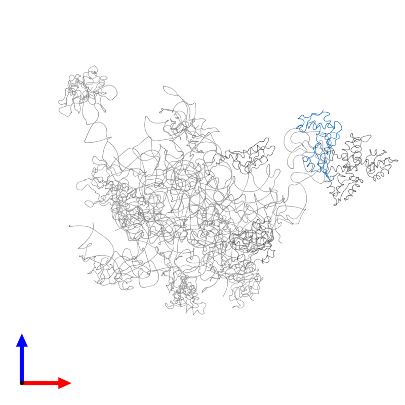 <div class='caption-body'>PDB entry 2ftc contains 1 copy of 39S ribosomal protein L11, mitochondrial in assembly 1. This protein is highlighted and viewed from the front.</div>