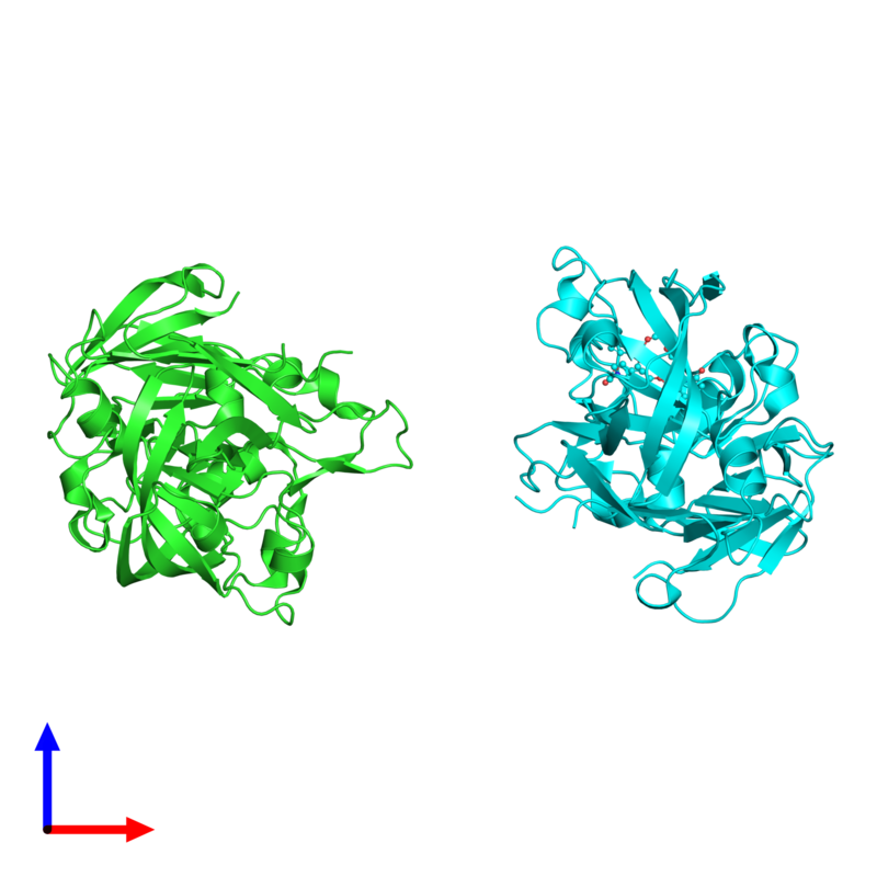 <div class='caption-body'><ul class ='image_legend_ul'>The deposited structure of PDB entry 2g26 coloured by chain and viewed from the side. The entry contains: <li class ='image_legend_li'>2 copies of Renin</li><li class ='image_legend_li'>There is 1 non-polymeric molecule<ul class ='image_legend_ul'><li class ='image_legend_li'>1 copy of (5-{[(2R)-1-(4-{3-[(2-METHOXYBENZYL)OXY]PROPOXY}PHENYL)-6-OXOPIPERAZIN-2-YL]METHOXY}-1H-INDOL-1-YL)ACETIC ACID</li></ul></li></div>