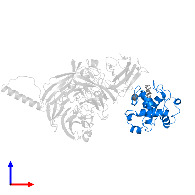 <div class='caption-body'>PDB entry 2gc4 contains 1 copy of Cytochrome c-L in assembly 1. This protein is highlighted and viewed from the front.</div>