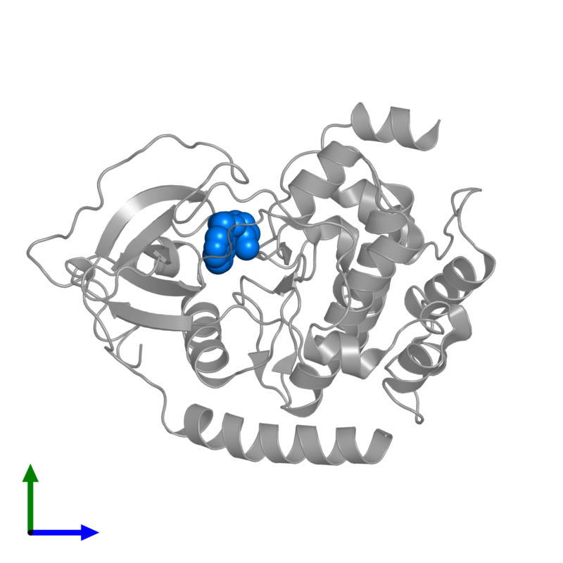 <div class='caption-body'>PDB entry 2gnl contains 1 copy of (S)-2-METHYL-1-[(4-METHYL-5-ISOQUINOLINE)SULFONYL]-HOMOPIPERAZINE in assembly 1. This small molecule is highlighted and viewed from the front.</div>