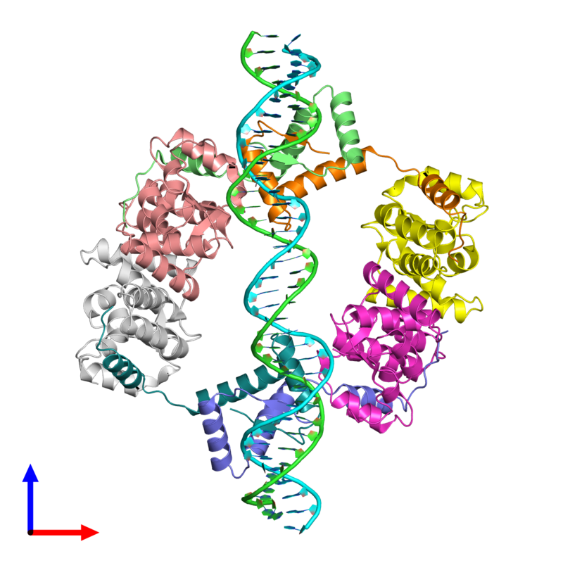 <div class='caption-body'><ul class ='image_legend_ul'>The deposited structure of PDB entry 2h1o coloured by chain and viewed from the front. The entry contains: <li class ='image_legend_li'>1 copy of IR36-strand 1</li><li class ='image_legend_li'>1 copy of IR36-strand 2</li><li class ='image_legend_li'>4 copies of Toxin FitB</li><li class ='image_legend_li'>4 copies of Antitoxin FitA</li><li class ='image_legend_li'>There are no non-polymeric molecules</li></ul></li></ul></li></div>