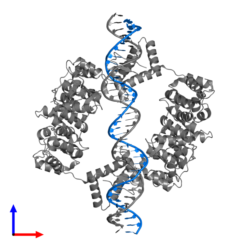 <div class='caption-body'>PDB entry 2h1o contains 1 copy of IR36-strand 1 in assembly 1. This DNA molecule is highlighted and viewed from the front.</div>