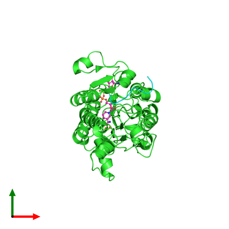 <div class='caption-body'><ul class ='image_legend_ul'>The deposited structure of PDB entry 2hu2 coloured by chain and viewed from the top. The entry contains: <li class ='image_legend_li'>1 copy of C-terminal-binding protein 1</li><li class ='image_legend_li'>1 copy of 9-mer peptide from Zinc finger protein 217</li><li class ='image_legend_li'>2 non-polymeric entities<ul class ='image_legend_ul'><li class ='image_legend_li'>1 copy of NICOTINAMIDE-ADENINE-DINUCLEOTIDE</li><li class ='image_legend_li'>1 copy of FORMIC ACID</li></ul></li></div>