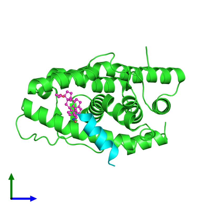 <div class='caption-body'><ul class ='image_legend_ul'>The deposited structure of PDB entry 2ovh coloured by chain and viewed from the side. The entry contains: <li class ='image_legend_li'>1 copy of Progesterone receptor</li><li class ='image_legend_li'>1 copy of SMRT peptide</li><li class ='image_legend_li'>There is 1 non-polymeric molecule<ul class ='image_legend_ul'><li class ='image_legend_li'>1 copy of 4-[(11BETA,17BETA)-17-METHOXY-17-(METHOXYMETHYL)-3-OXOESTRA-4,9-DIEN-11-YL]BENZALDEHYDE OXIME</li></ul></li></div>