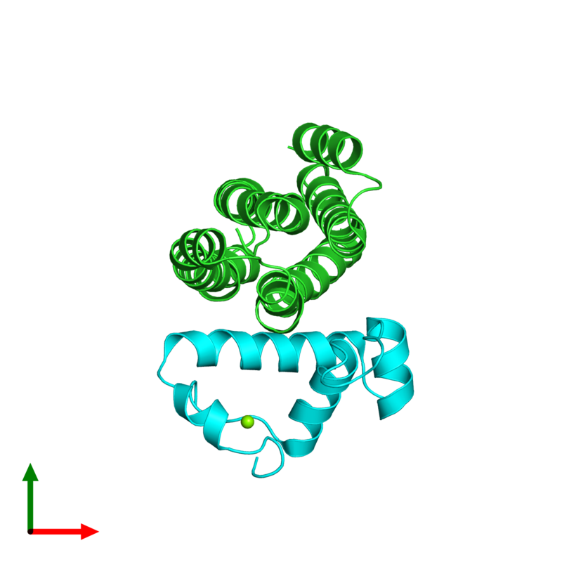 <div class='caption-body'><ul class ='image_legend_ul'>The deposited structure of PDB entry 2p7v coloured by chain and viewed from the top. The entry contains: <li class ='image_legend_li'>1 copy of Regulator of sigma D</li><li class ='image_legend_li'>1 copy of RNA polymerase sigma factor rpoD</li><li class ='image_legend_li'>There is 1 non-polymeric molecule<ul class ='image_legend_ul'><li class ='image_legend_li'>1 copy of MAGNESIUM ION</li></ul></li></div>