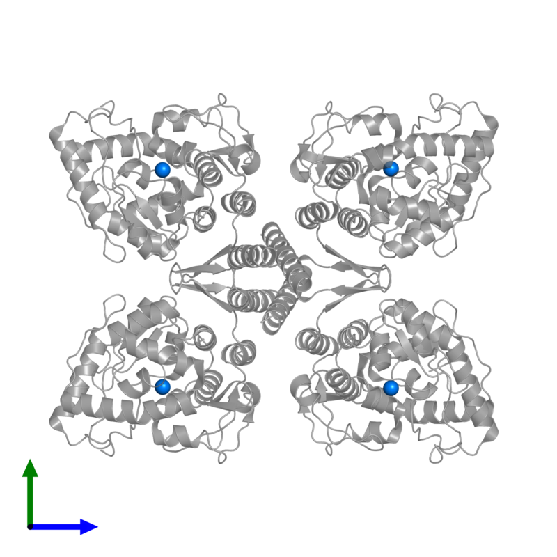 <div class='caption-body'>PDB entry 2pah contains 4 copies of FE (III) ION in assembly 1. This small molecule is highlighted and viewed from the front.</div>