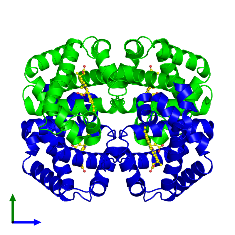 <div class='caption-body'><ul class ='image_legend_ul'> Tetrameric assembly 1 of PDB entry 2peg coloured by chemically distinct molecules and viewed from the side. This assembly contains:<li class ='image_legend_li'>2 copies of Hemoglobin subunit alpha</li><li class ='image_legend_li'>2 copies of Hemoglobin subunit beta</li><li class ='image_legend_li'>4 copies of PROTOPORPHYRIN IX CONTAINING FE</li></ul></div>