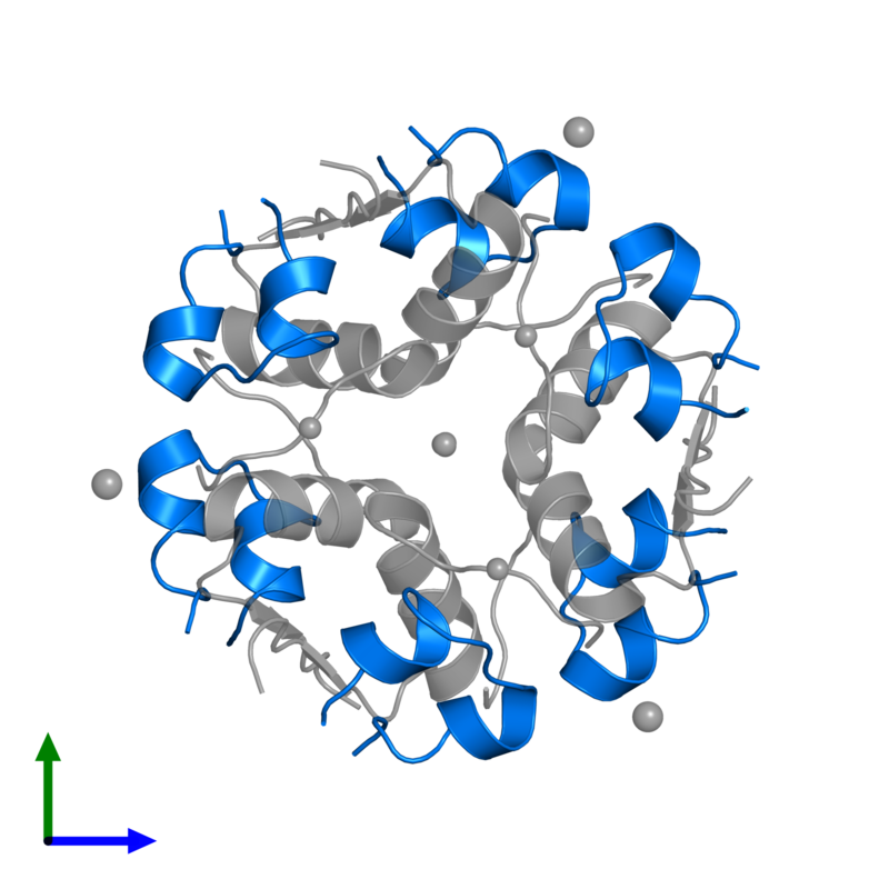 <div class='caption-body'>PDB entry 2r36 contains 6 copies of Insulin A chain in assembly 1. This protein is highlighted and viewed from the front.</div>