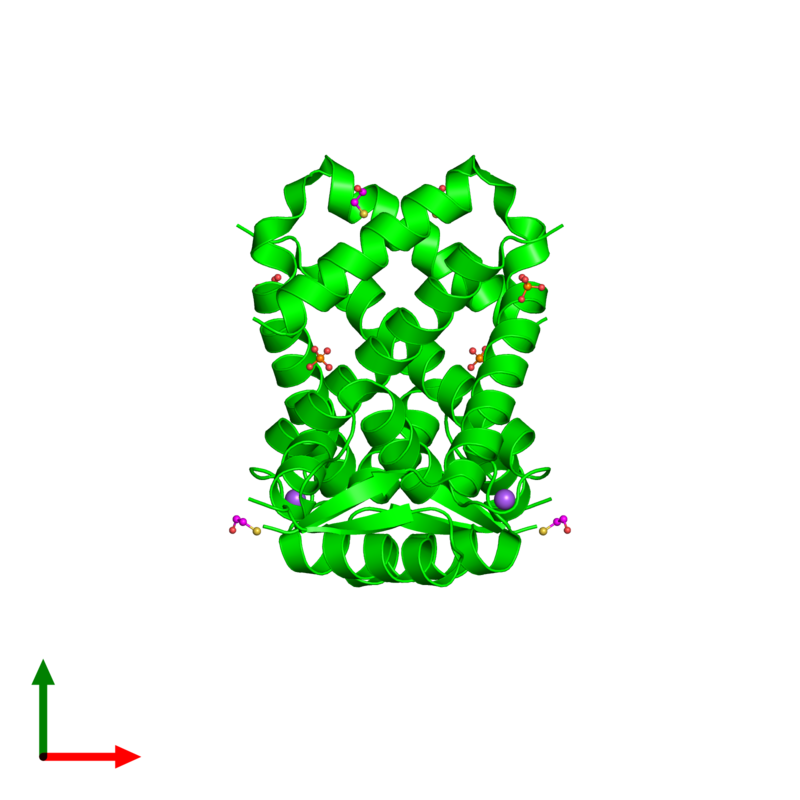 <div class='caption-body'><ul class ='image_legend_ul'> Dimeric assembly 1 of PDB entry 2rdp coloured by chemically distinct molecules and viewed from the top. This assembly contains:<li class ='image_legend_li'>2 copies of HTH marR-type domain-containing protein</li><li class ='image_legend_li'>2 copies of SODIUM ION</li><li class ='image_legend_li'>4 copies of PHOSPHATE ION</li><li class ='image_legend_li'>4 copies of BETA-MERCAPTOETHANOL</li></ul></div>
