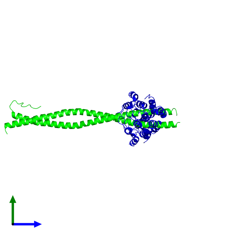 <div class='caption-body'><ul class ='image_legend_ul'>The deposited structure of PDB entry 2v4h coloured by chemically distinct molecules and viewed from the side. The entry contains: <li class ='image_legend_li'>2 copies of NF-kappa-B essential modulator</li><li class ='image_legend_li'>2 copies of 1D5 DARPIN</li><li class ='image_legend_li'>There are no non-polymeric molecules</li></ul></li></ul></li></div>