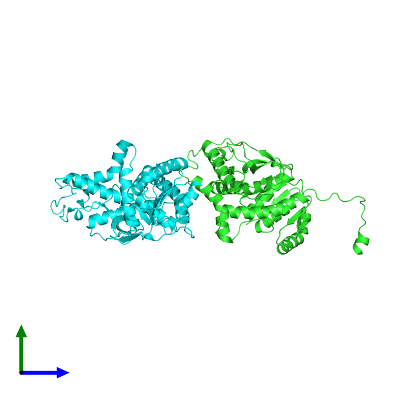 <div class='caption-body'><ul class ='image_legend_ul'>The deposited structure of PDB entry 2v65 coloured by chain and viewed from the side. The entry contains: <li class ='image_legend_li'>2 copies of L-lactate dehydrogenase A chain</li><li class ='image_legend_li'>There are no non-polymeric molecules</li></ul></li></ul></li></div>