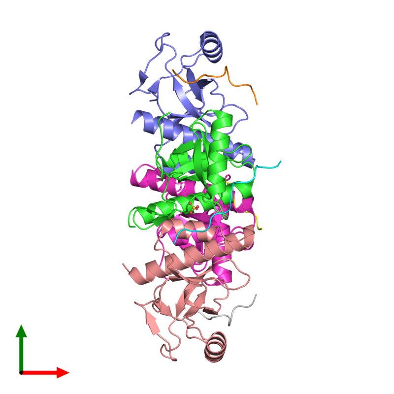 <div class='caption-body'><ul class ='image_legend_ul'>The deposited structure of PDB entry 2x4x coloured by chain and viewed from the top. The entry contains: <li class ='image_legend_li'>4 copies of PEREGRIN</li><li class ='image_legend_li'>4 copies of HISTONE H3.2</li><li class ='image_legend_li'>There is 1 non-polymeric molecule<ul class ='image_legend_ul'><li class ='image_legend_li'>1 copy of SULFATE ION</li></ul></li></div>