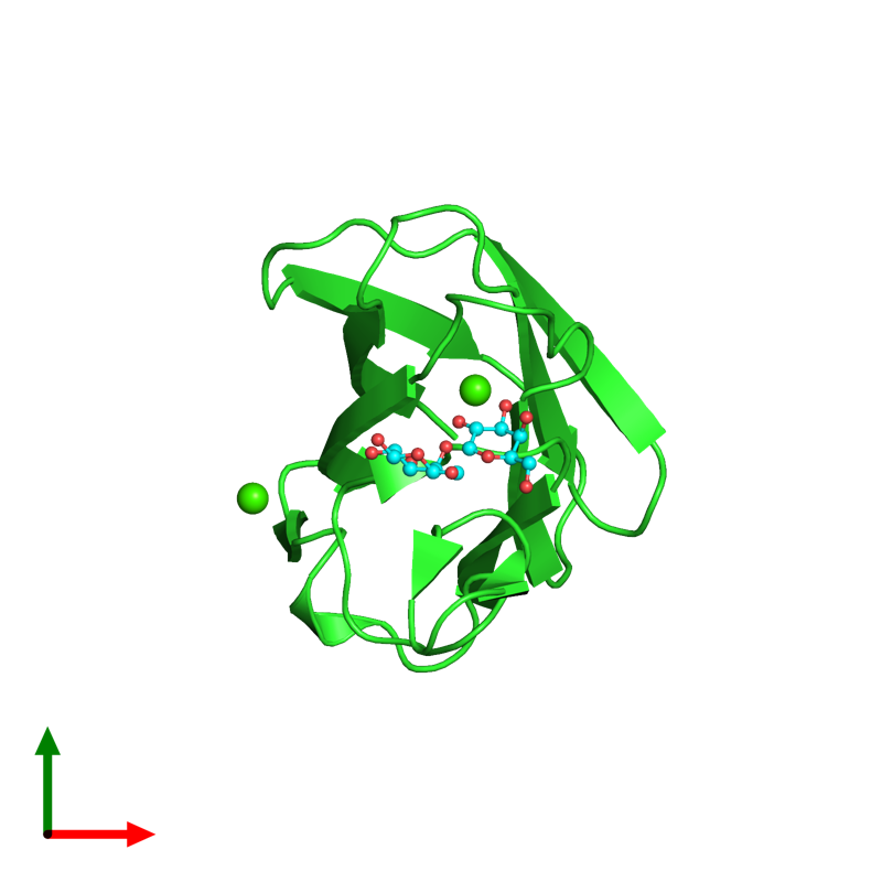 <div class='caption-body'><ul class ='image_legend_ul'>The deposited structure of PDB entry 2xfe coloured by chain and viewed from the top. The entry contains: <li class ='image_legend_li'>1 copy of CBM60 domain-containing protein</li><li class ='image_legend_li'>There is 1 non-polymeric molecule<ul class ='image_legend_ul'><li class ='image_legend_li'>2 copies of CALCIUM ION</li></ul></li></div>