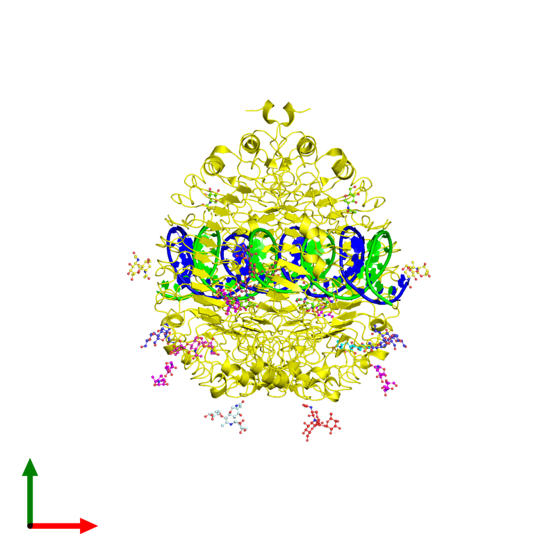 <div class='caption-body'><ul class ='image_legend_ul'> Tetrameric assembly 1 of PDB entry 3ciy coloured by chemically distinct molecules and viewed from the top. This assembly contains:<li class ='image_legend_li'>One copy of 46-MER</li><li class ='image_legend_li'>One copy of 46-MER</li><li class ='image_legend_li'>2 copies of Toll-like receptor 3</li><li class ='image_legend_li'>4 copies of 2-acetamido-2-deoxy-alpha-D-glucopyranose-(1-4)-2-acetamido-2-deoxy-beta-D-glucopyranose</li><li class ='image_legend_li'>One copy of alpha-D-mannopyranose-(1-4)-2-acetamido-2-deoxy-beta-D-glucopyranose-(1-4)-2-acetamido-2-deoxy-beta-D-glucopyranose</li><li class ='image_legend_li'>One copy of 2-acetamido-2-deoxy-beta-D-glucopyranose-(1-4)-[alpha-L-fucopyranose-(1-6)]2-acetamido-2-deoxy-beta-D-glucopyranose</li><li class ='image_legend_li'>One copy of alpha-D-mannopyranose-(1-3)-[alpha-D-mannopyranose-(1-6)]alpha-D-mannopyranose-(1-4)-2-acetamido-2-deoxy-beta-D-glucopyranose-(1-4)-2-acetamido-2-deoxy-beta-D-glucopyranose</li><li class ='image_legend_li'>2 copies of beta-D-mannopyranose-(1-4)-2-acetamido-2-deoxy-alpha-D-glucopyranose-(1-4)-2-acetamido-2-deoxy-beta-D-glucopyranose</li><li class ='image_legend_li'>2 copies of 2-acetamido-2-deoxy-beta-D-glucopyranose-(1-4)-2-acetamido-2-deoxy-beta-D-glucopyranose</li><li class ='image_legend_li'>One copy of beta-D-mannopyranose-(1-4)-2-acetamido-2-deoxy-beta-D-glucopyranose-(1-4)-2-acetamido-2-deoxy-beta-D-glucopyranose</li><li class ='image_legend_li'>One copy of 2-acetamido-2-deoxy-beta-D-glucopyranose-(1-4)-[beta-L-fucopyranose-(1-6)]2-acetamido-2-deoxy-beta-D-glucopyranose</li><li class ='image_legend_li'>One copy of alpha-D-mannopyranose-(1-3)-[alpha-D-mannopyranose-(1-6)]alpha-D-mannopyranose-(1-4)-2-acetamido-2-deoxy-alpha-D-glucopyranose-(1-4)-2-acetamido-2-deoxy-beta-D-glucopyranose</li><li class ='image_legend_li'>4 copies of 2-acetamido-2-deoxy-beta-D-glucopyranose</li></ul></div>
