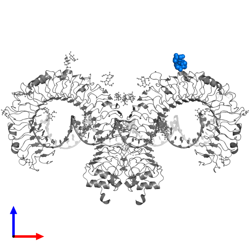 <div class='caption-body'>PDB entry 3ciy contains 1 copy of 2-acetamido-2-deoxy-beta-D-glucopyranose-(1-4)-[beta-L-fucopyranose-(1-6)]2-acetamido-2-deoxy-beta-D-glucopyranose in assembly 1. This small molecule is highlighted and viewed from the front.</div>