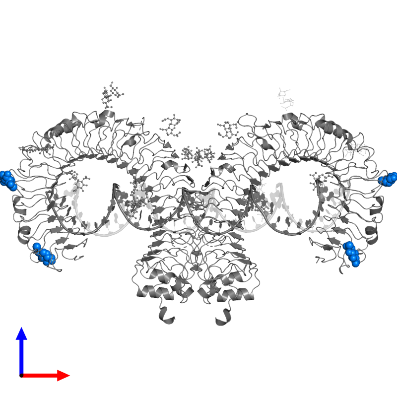 <div class='caption-body'>PDB entry 3ciy contains 4 copies of 2-acetamido-2-deoxy-beta-D-glucopyranose in assembly 1. This small molecule is highlighted and viewed from the front.</div>