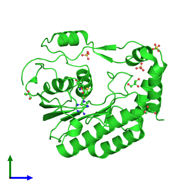 <div class='caption-body'><ul class ='image_legend_ul'>The deposited structure of PDB entry 3gcz coloured by chain and viewed from the front. The entry contains: <li class ='image_legend_li'>1 copy of Core protein</li><li class ='image_legend_li'>3 non-polymeric entities<ul class ='image_legend_ul'><li class ='image_legend_li'>1 copy of S-ADENOSYLMETHIONINE</li><li class ='image_legend_li'>3 copies of GLYCEROL</li><li class ='image_legend_li'>3 copies of SULFATE ION</li></ul></li></div>