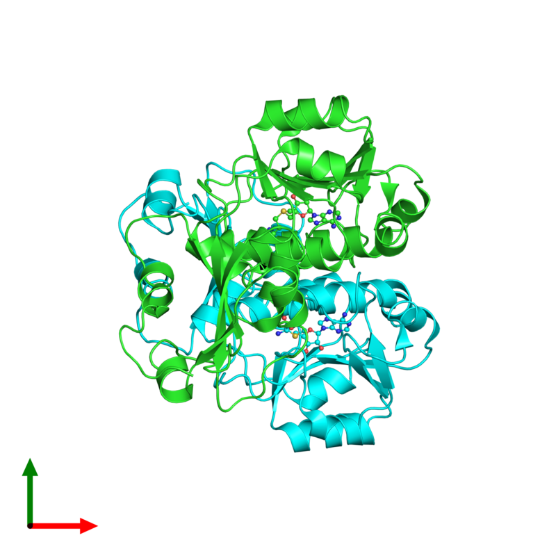 <div class='caption-body'><ul class ='image_legend_ul'>The deposited structure of PDB entry 3gyq coloured by chain and viewed from the top. The entry contains: <li class ='image_legend_li'>2 copies of 23S rRNA (adenosine(1067)-2'-O)-methyltransferase</li><li class ='image_legend_li'>There is 1 non-polymeric molecule<ul class ='image_legend_ul'><li class ='image_legend_li'>2 copies of S-ADENOSYLMETHIONINE</li></ul></li></div>