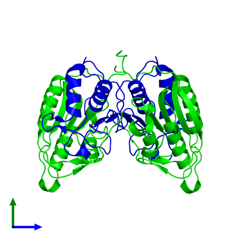 <div class='caption-body'><ul class ='image_legend_ul'> Tetrameric assembly 1 of PDB entry 3ibf coloured by chemically distinct molecules and viewed from the side. This assembly contains:<li class ='image_legend_li'>2 copies of Caspase-7 subunit p20</li><li class ='image_legend_li'>2 copies of Caspase-7 subunit p11</li></ul></div>