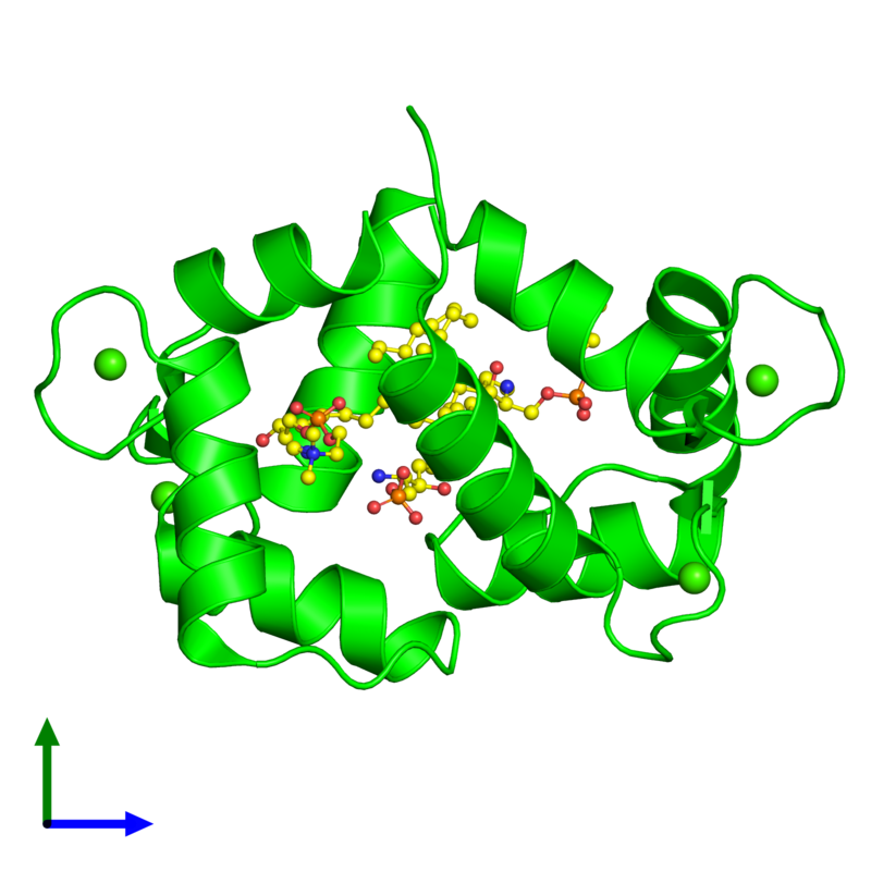 <div class='caption-body'><ul class ='image_legend_ul'> Monomeric assembly 1 of PDB entry 3if7 coloured by chemically distinct molecules and viewed from the side. This assembly contains:<li class ='image_legend_li'>One copy of Calmodulin</li><li class ='image_legend_li'>4 copies of CALCIUM ION</li><li class ='image_legend_li'>4 copies of 2-{[(R)-{[(2S,3R,4E)-2-amino-3-hydroxyoctadec-4-en-1-yl]oxy}(hydroxy)phosphoryl]oxy}-N,N,N-trimethylethanaminium</li></ul></div>