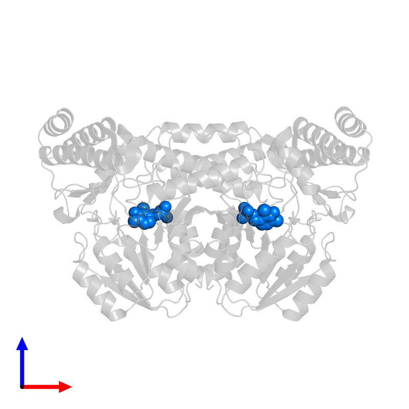 <div class='caption-body'>PDB entry 3isl contains 2 copies of PYRIDOXAL-5'-PHOSPHATE in assembly 1. This small molecule is highlighted and viewed from the front.</div>