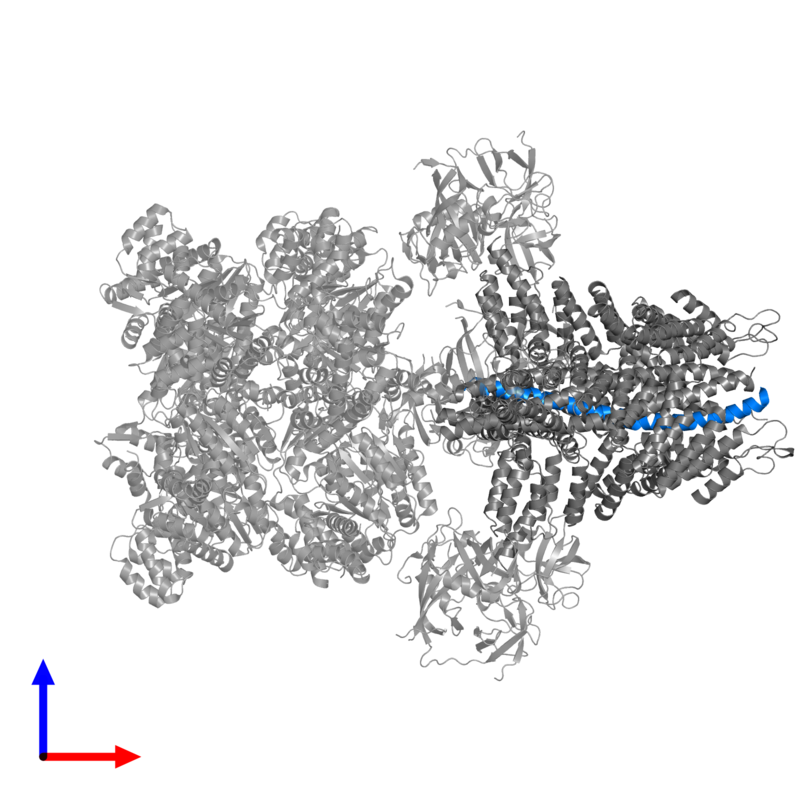 <div class='caption-body'>PDB entry 3j96 contains 1 copy of Vesicle-associated membrane protein 2 in assembly 1. This protein is highlighted and viewed from the front.</div>