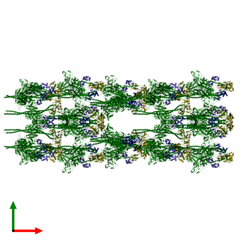 <div class='caption-body'><ul class ='image_legend_ul'> 120-meric assembly 1 of PDB entry 3jax coloured by chemically distinct molecules and viewed from the top. This assembly contains:<li class ='image_legend_li'>40 copies of Myosin 2 heavy chain</li><li class ='image_legend_li'>40 copies of Smooth muscle myosin essential light chain</li><li class ='image_legend_li'>40 copies of Myosin regulatory light chain</li></ul></div>
