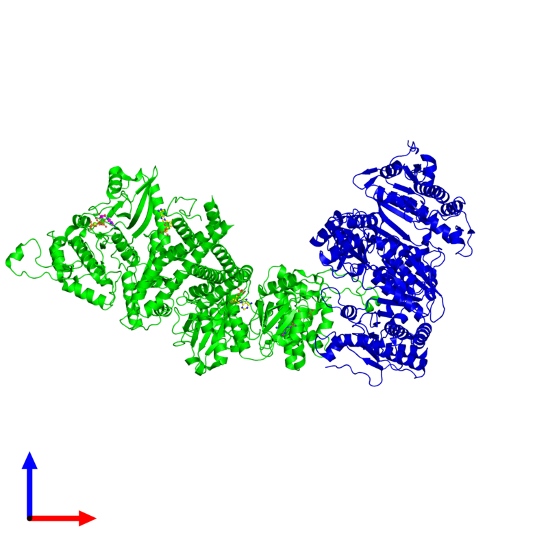 <div class='caption-body'><ul class ='image_legend_ul'>The deposited structure of PDB entry 3lcb coloured by chemically distinct molecules and viewed from the front. The entry contains: <li class ='image_legend_li'>2 copies of Isocitrate dehydrogenase kinase/phosphatase</li><li class ='image_legend_li'>2 copies of Isocitrate dehydrogenase [NADP]</li><li class ='image_legend_li'>3 non-polymeric entities<ul class ='image_legend_ul'><li class ='image_legend_li'>2 copies of ADENOSINE MONOPHOSPHATE</li><li class ='image_legend_li'>2 copies of ADENOSINE-5'-TRIPHOSPHATE</li><li class ='image_legend_li'>2 copies of MAGNESIUM ION</li></ul></li></div>