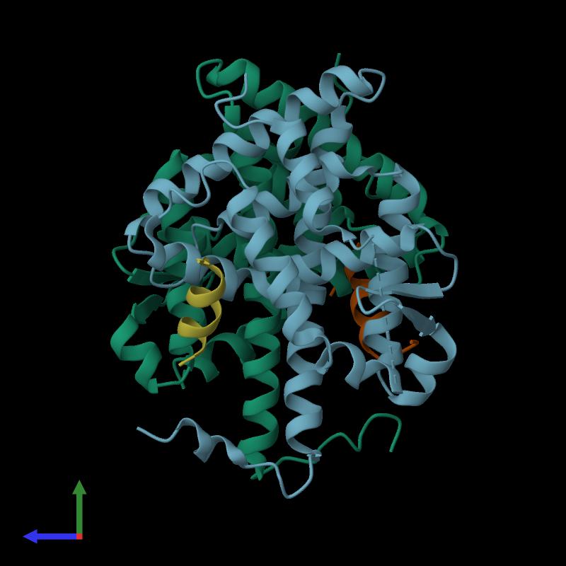 <div class='caption-body'><ul class ='image_legend_ul'>The deposited structure of PDB entry 3r29 coloured by chain and viewed from the side. The entry contains: <li class ='image_legend_li'>2 copies of Retinoic acid receptor RXR-alpha</li><li class ='image_legend_li'>2 copies of Nuclear receptor corepressor 2</li><li class ='image_legend_li'>There are no non-polymeric molecules</li></ul></li></ul></li></div>
