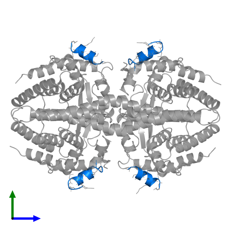 <div class='caption-body'>PDB entry 3r29 contains 4 copies of Nuclear receptor corepressor 2 in assembly 1. This protein is highlighted and viewed from the front.</div>