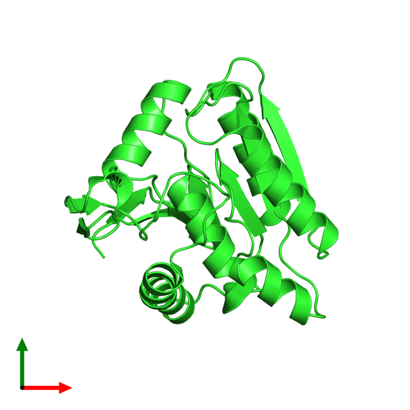 <div class='caption-body'><ul class ='image_legend_ul'>The deposited structure of PDB entry 3u0v coloured by chain and viewed from the top. The entry contains: <li class ='image_legend_li'>1 copy of Lysophospholipase-like protein 1</li><li class ='image_legend_li'>There are no non-polymeric molecules</li></ul></li></ul></li></div>