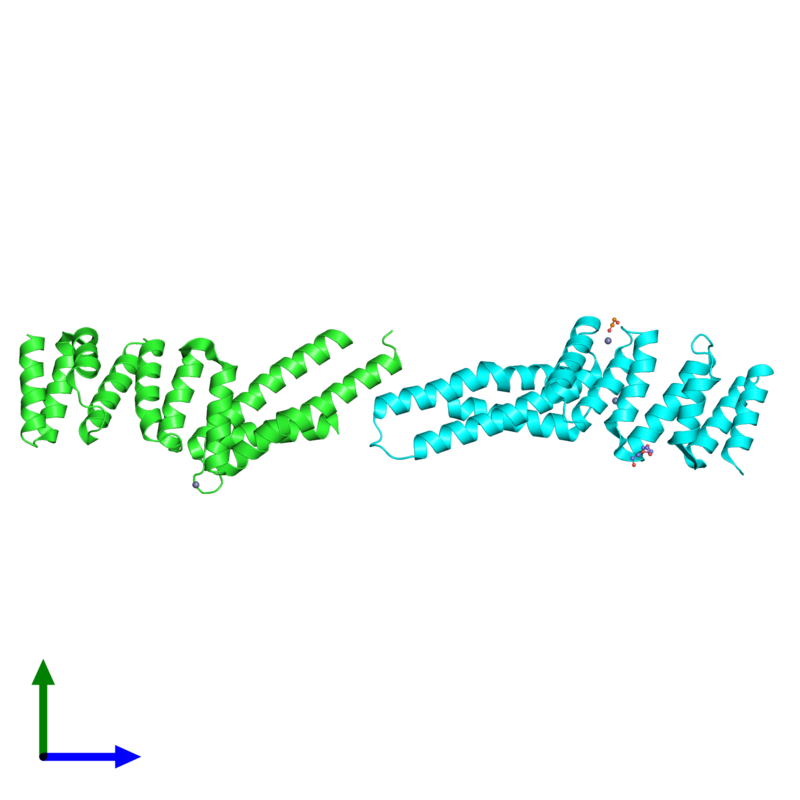 <div class='caption-body'><ul class ='image_legend_ul'>The deposited structure of PDB entry 3urz coloured by chain and viewed from the side. The entry contains: <li class ='image_legend_li'>2 copies of Uncharacterized protein</li><li class ='image_legend_li'>3 non-polymeric entities<ul class ='image_legend_ul'><li class ='image_legend_li'>4 copies of ZINC ION</li><li class ='image_legend_li'>1 copy of TETRAETHYLENE GLYCOL</li><li class ='image_legend_li'>1 copy of 1,2-ETHANEDIOL</li></ul></li></div>