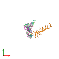 PDB 486d coloured by chain and viewed from the top.