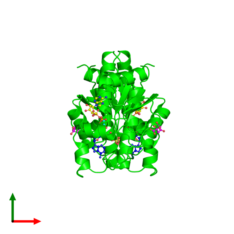 <div class='caption-body'><ul class ='image_legend_ul'> Dimeric assembly 1 of PDB entry 4bzq coloured by chemically distinct molecules and viewed from the top. This assembly contains:<li class ='image_legend_li'>2 copies of Bifunctional enzyme CysN/CysC</li><li class ='image_legend_li'>2 copies of ADENOSINE-5'-PHOSPHOSULFATE</li><li class ='image_legend_li'>2 copies of ADENOSINE-5'-DIPHOSPHATE</li><li class ='image_legend_li'>2 copies of CITRIC ACID</li><li class ='image_legend_li'>2 copies of 1,2-ETHANEDIOL</li></ul></div>