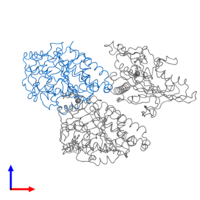 PDB 4ck7 contains 1 copy of Tubulin alpha-1D chain in assembly 1. This protein is highlighted and viewed from the front.