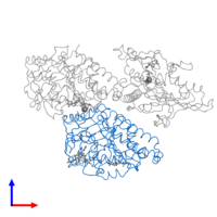 PDB 4ck7 contains 1 copy of Tubulin beta-2B chain in assembly 1. This protein is highlighted and viewed from the front.