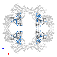 PDB 4d1q contains 8 copies of TERMINAL INVERTED REPEAT in assembly 1. This DNA molecule is highlighted and viewed from the front.
