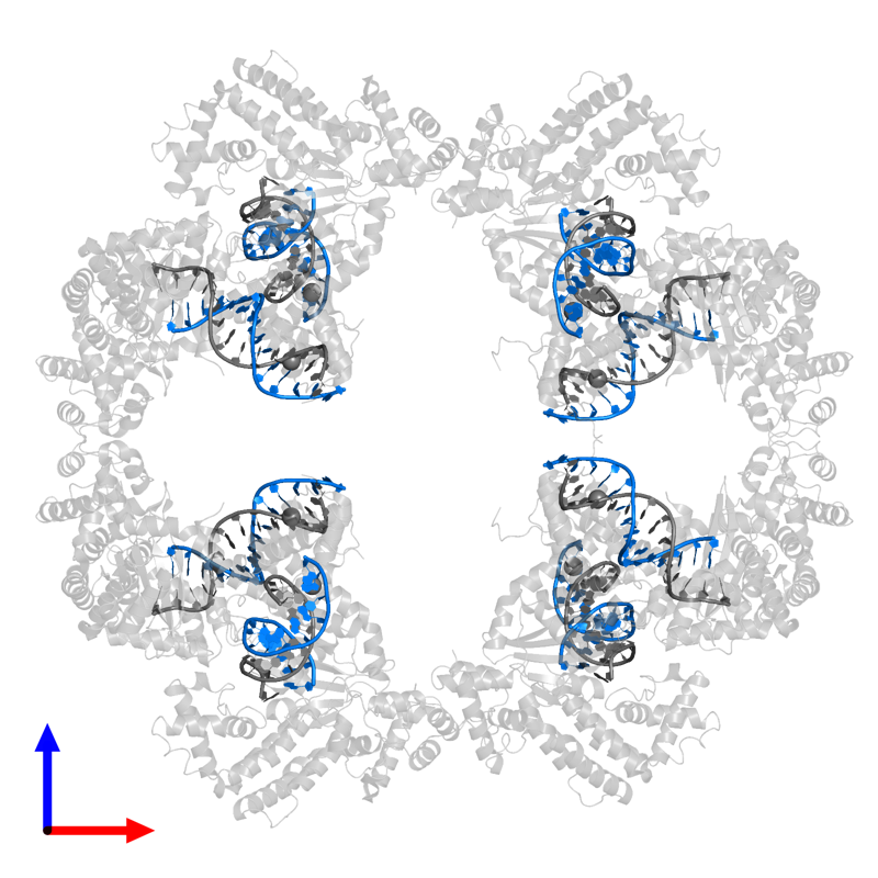 <div class='caption-body'>PDB entry 4d1q contains 8 copies of TERMINAL INVERTED REPEAT in assembly 1. This DNA molecule is highlighted and viewed from the front.</div>