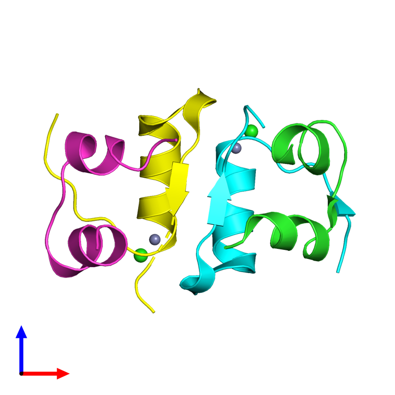<div class='caption-body'><ul class ='image_legend_ul'>The deposited structure of PDB entry 4eyd coloured by chain and viewed from the front. The entry contains: <li class ='image_legend_li'>2 copies of Insulin A chain</li><li class ='image_legend_li'>2 copies of Insulin B chain</li><li class ='image_legend_li'>2 non-polymeric entities<ul class ='image_legend_ul'><li class ='image_legend_li'>2 copies of ZINC ION</li><li class ='image_legend_li'>2 copies of CHLORIDE ION</li></ul></li></div>