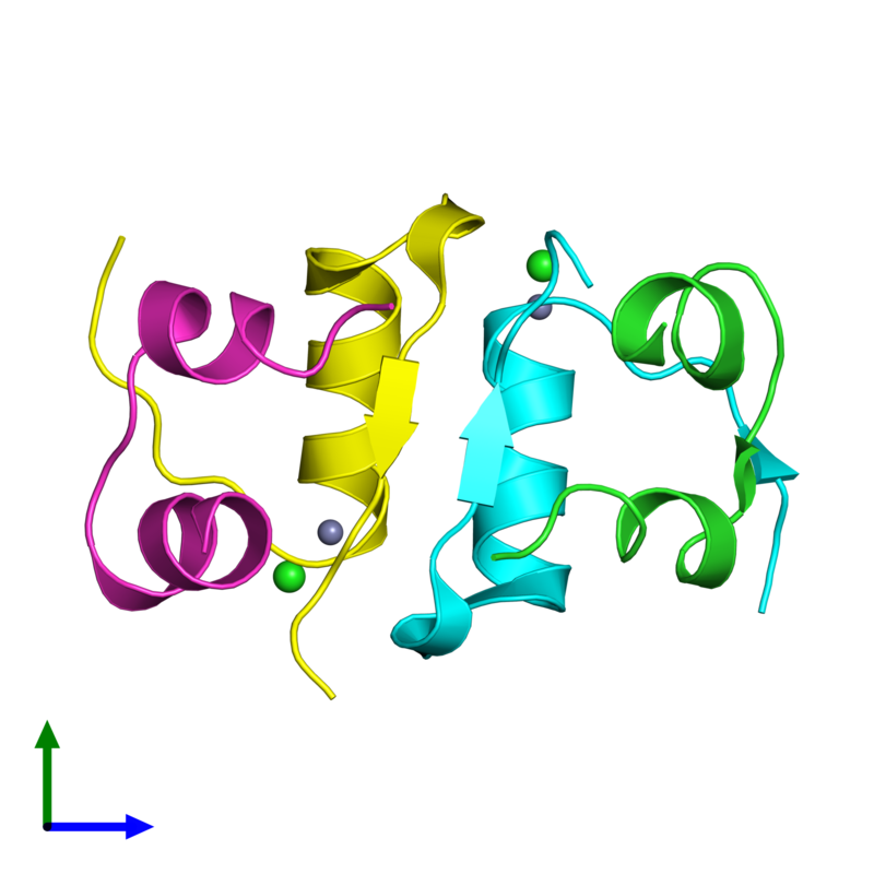 <div class='caption-body'><ul class ='image_legend_ul'>The deposited structure of PDB entry 4f0o coloured by chain and viewed from the front. The entry contains: <li class ='image_legend_li'>2 copies of Insulin A chain</li><li class ='image_legend_li'>2 copies of Insulin B chain</li><li class ='image_legend_li'>2 non-polymeric entities<ul class ='image_legend_ul'><li class ='image_legend_li'>2 copies of ZINC ION</li><li class ='image_legend_li'>2 copies of CHLORIDE ION</li></ul></li></div>