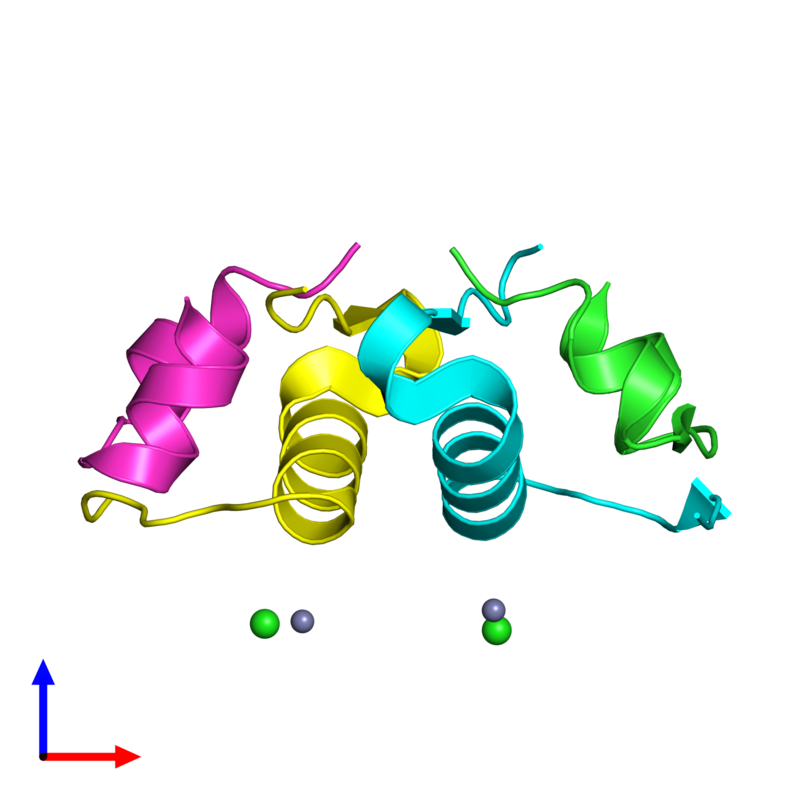<div class='caption-body'><ul class ='image_legend_ul'>The deposited structure of PDB entry 4f0o coloured by chain and viewed from the side. The entry contains: <li class ='image_legend_li'>2 copies of Insulin A chain</li><li class ='image_legend_li'>2 copies of Insulin B chain</li><li class ='image_legend_li'>2 non-polymeric entities<ul class ='image_legend_ul'><li class ='image_legend_li'>2 copies of ZINC ION</li><li class ='image_legend_li'>2 copies of CHLORIDE ION</li></ul></li></div>