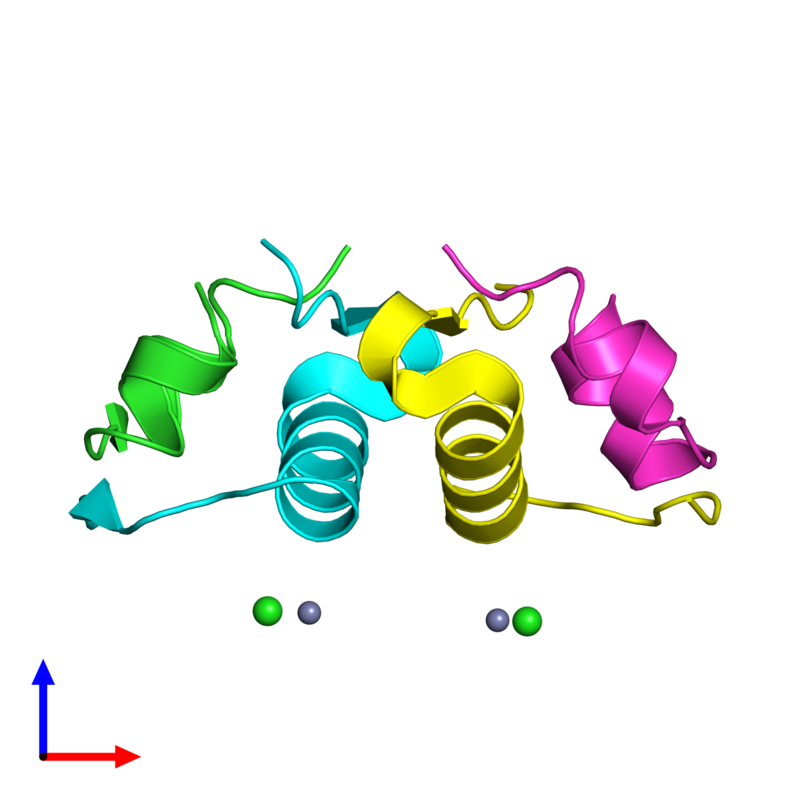 <div class='caption-body'><ul class ='image_legend_ul'>The deposited structure of PDB entry 4f1a coloured by chain and viewed from the side. The entry contains: <li class ='image_legend_li'>2 copies of Insulin A chain</li><li class ='image_legend_li'>2 copies of Insulin B chain</li><li class ='image_legend_li'>2 non-polymeric entities<ul class ='image_legend_ul'><li class ='image_legend_li'>2 copies of ZINC ION</li><li class ='image_legend_li'>2 copies of CHLORIDE ION</li></ul></li></div>