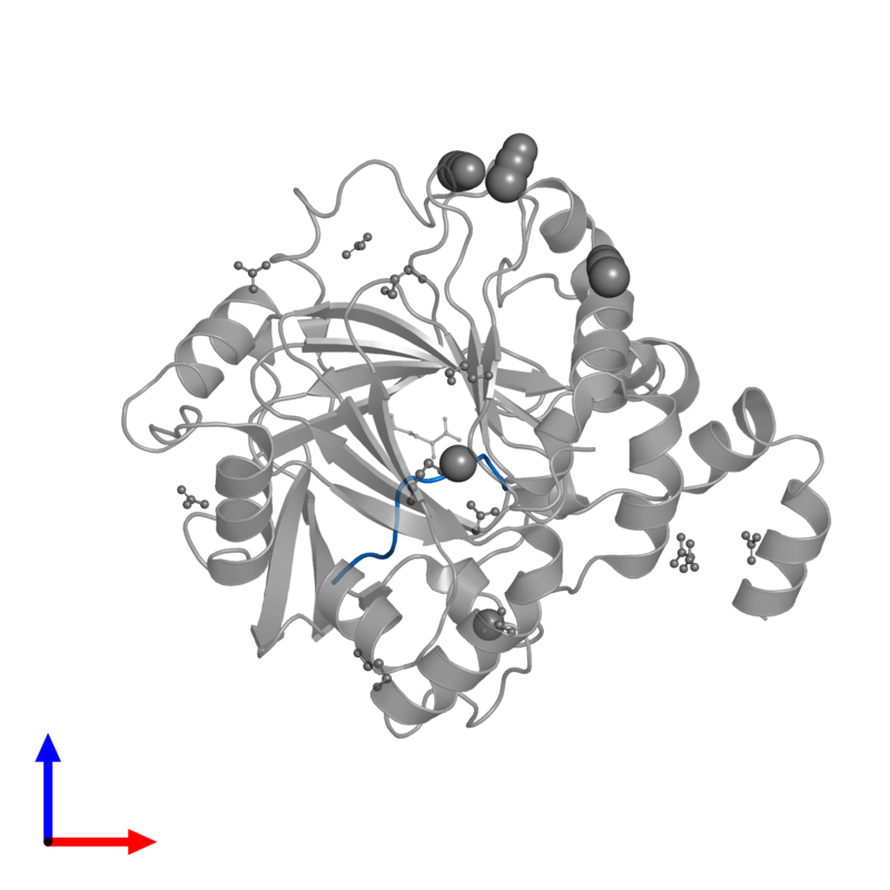 <div class='caption-body'>PDB entry 4hon contains 1 copy of Histone H3 Peptide in assembly 1. This protein is highlighted and viewed from the front.</div>
