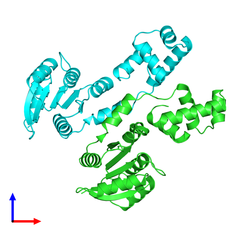 <div class='caption-body'><ul class ='image_legend_ul'>The deposited structure of PDB entry 4hye coloured by chain and viewed from the front. The entry contains: <li class ='image_legend_li'>2 copies of Response regulator</li><li class ='image_legend_li'>There are no non-polymeric molecules</li></ul></li></ul></li></div>
