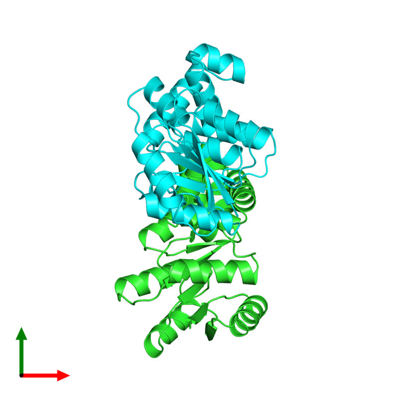 <div class='caption-body'><ul class ='image_legend_ul'>The deposited structure of PDB entry 4hye coloured by chain and viewed from the top. The entry contains: <li class ='image_legend_li'>2 copies of Response regulator</li><li class ='image_legend_li'>There are no non-polymeric molecules</li></ul></li></ul></li></div>