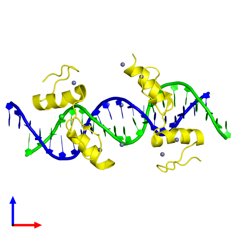 <div class='caption-body'><ul class ='image_legend_ul'> Tetrameric assembly 1 of PDB entry 4is1 coloured by chemically distinct molecules and viewed from the front. This assembly contains:<li class ='image_legend_li'>One copy of 5'-D(*TP*TP*TP*GP*CP*AP*GP*AP*AP*TP*CP*GP*AP*TP*TP*CP*TP*GP*CP*A)-3'</li><li class ='image_legend_li'>One copy of 5'-D(*AP*AP*TP*GP*CP*AP*GP*AP*AP*TP*CP*GP*AP*TP*TP*CP*TP*GP*CP*A)-3'</li><li class ='image_legend_li'>2 copies of Zinc finger protein 217</li><li class ='image_legend_li'>8 copies of ZINC ION</li><li class ='image_legend_li'>One copy of CHLORIDE ION</li></ul></div>