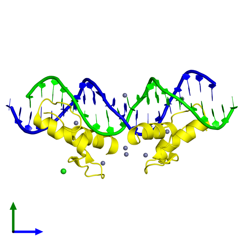 <div class='caption-body'><ul class ='image_legend_ul'> Tetrameric assembly 1 of PDB entry 4is1 coloured by chemically distinct molecules and viewed from the side. This assembly contains:<li class ='image_legend_li'>One copy of 5'-D(*TP*TP*TP*GP*CP*AP*GP*AP*AP*TP*CP*GP*AP*TP*TP*CP*TP*GP*CP*A)-3'</li><li class ='image_legend_li'>One copy of 5'-D(*AP*AP*TP*GP*CP*AP*GP*AP*AP*TP*CP*GP*AP*TP*TP*CP*TP*GP*CP*A)-3'</li><li class ='image_legend_li'>2 copies of Zinc finger protein 217</li><li class ='image_legend_li'>8 copies of ZINC ION</li><li class ='image_legend_li'>One copy of CHLORIDE ION</li></ul></div>
