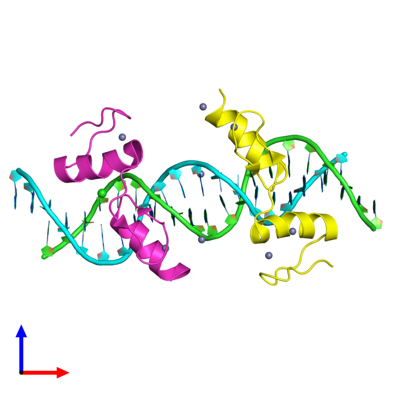 <div class='caption-body'><ul class ='image_legend_ul'>The deposited structure of PDB entry 4is1 coloured by chain and viewed from the front. The entry contains: <li class ='image_legend_li'>1 copy of 5'-D(*TP*TP*TP*GP*CP*AP*GP*AP*AP*TP*CP*GP*AP*TP*TP*CP*TP*GP*CP*A)-3'</li><li class ='image_legend_li'>1 copy of 5'-D(*AP*AP*TP*GP*CP*AP*GP*AP*AP*TP*CP*GP*AP*TP*TP*CP*TP*GP*CP*A)-3'</li><li class ='image_legend_li'>2 copies of Zinc finger protein 217</li><li class ='image_legend_li'>2 non-polymeric entities<ul class ='image_legend_ul'><li class ='image_legend_li'>8 copies of ZINC ION</li><li class ='image_legend_li'>1 copy of CHLORIDE ION</li></ul></li></div>