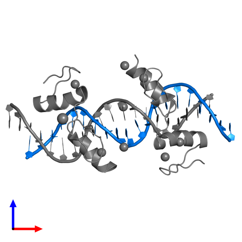 <div class='caption-body'>PDB entry 4is1 contains 1 copy of 5'-D(*TP*TP*TP*GP*CP*AP*GP*AP*AP*TP*CP*GP*AP*TP*TP*CP*TP*GP*CP*A)-3' in assembly 1. This DNA molecule is highlighted and viewed from the front.</div>